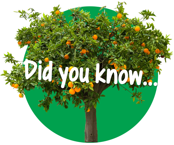 Citrus Tree - Did you know?
