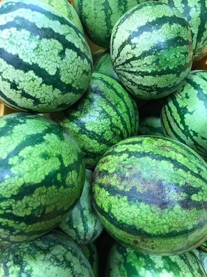 Fresh Fruit & Vegetables Gallery - Watermelons