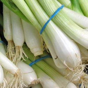 Fruit & Veg Specials - Spring Onion